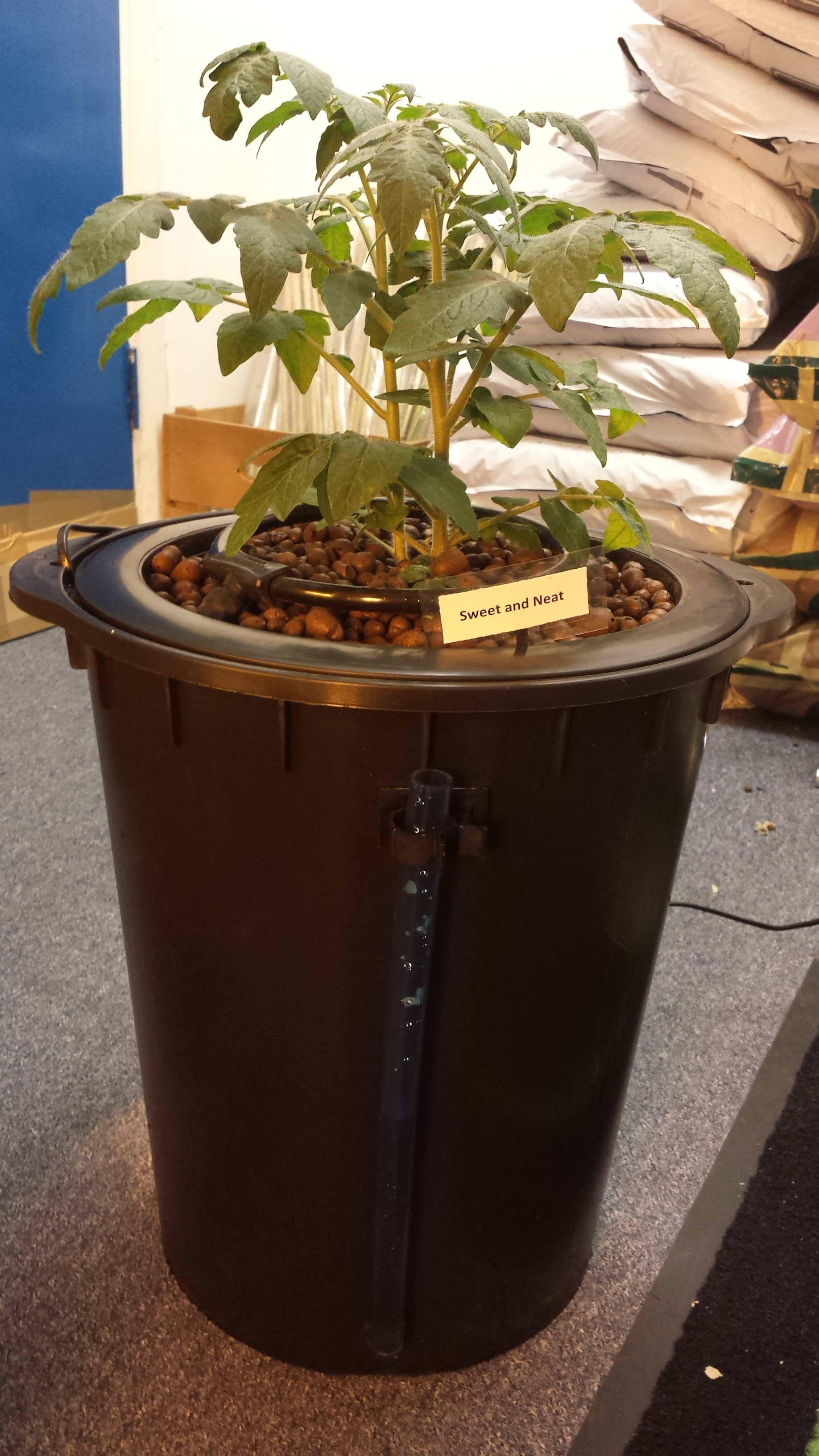 Sweet and Neat Tomatoes - Hydroponics Grow Diary - Latest News from ...