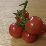 Sweet and Neat Tomatoes - Hydroponics Grow Diary